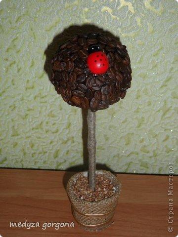 кофейное дерево фото 1