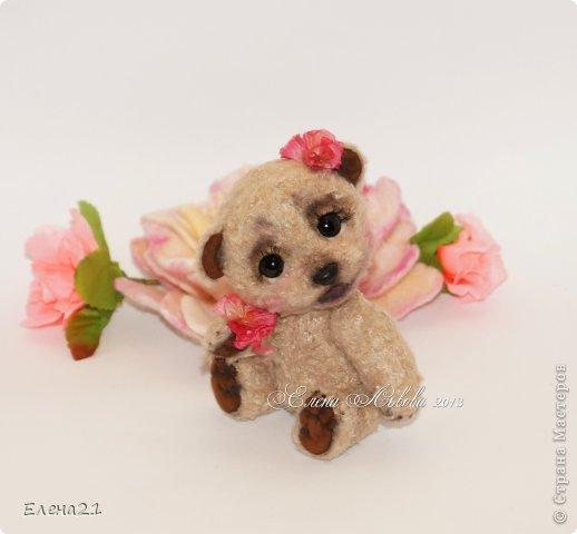 Мишка Дашенька фото 9