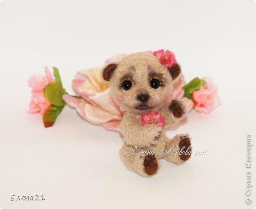 Мишка Дашенька фото 10