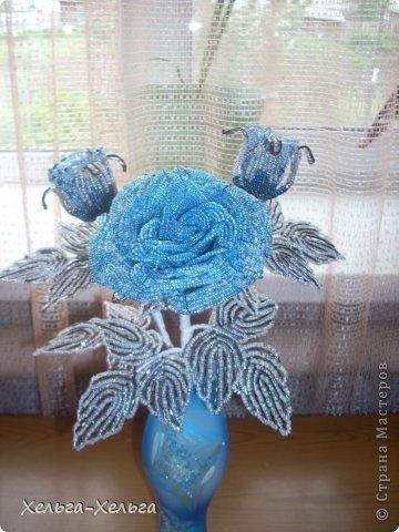 Морозная роза фото 1