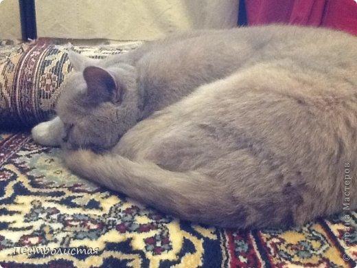 Ей 5 лет она ленивая но ночью она не может устоять на месте фото 20