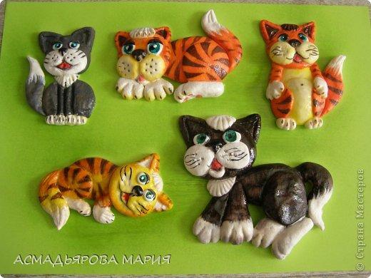 Котики  фото 5