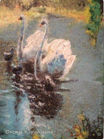 Лебеди фото 2