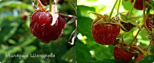 мои любимые ))ромашки фото 7