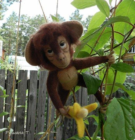 обезьянка Чита. фото 2