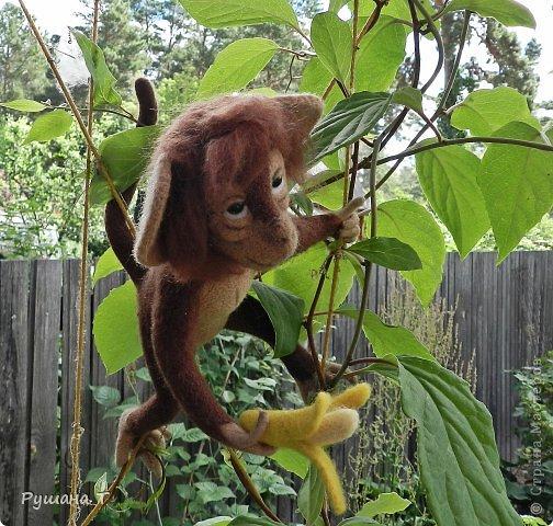 обезьянка Чита. фото 3