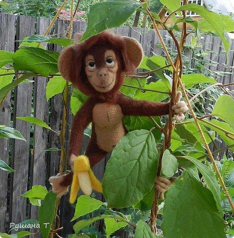 обезьянка Чита. фото 1