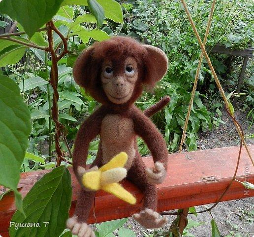 обезьянка Чита. фото 4