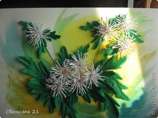 Всем привет!!!!!! У меня расцвели хризантемы.  фото 2