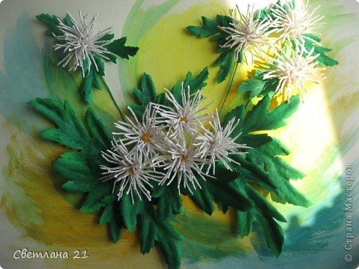 Всем привет!!!!!! У меня расцвели хризантемы.  фото 8