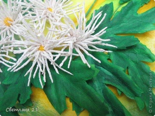 Всем привет!!!!!! У меня расцвели хризантемы.  фото 5