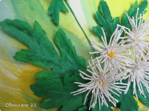 Всем привет!!!!!! У меня расцвели хризантемы.  фото 6