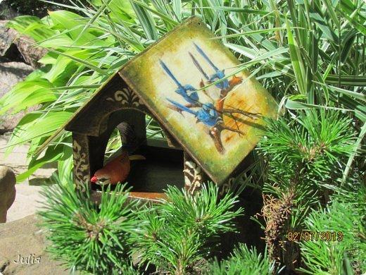 любим мы птичек... любим их кормить.... фото 1