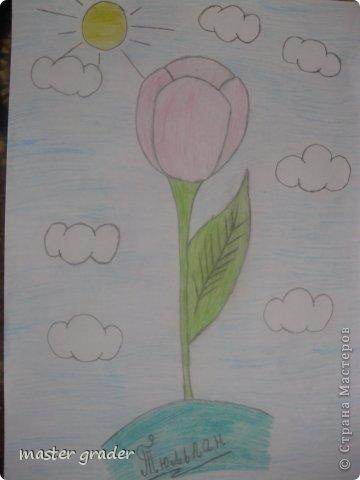 Вот и мой тюльпан.Рисовала обычными цветными карандашами. фото 1