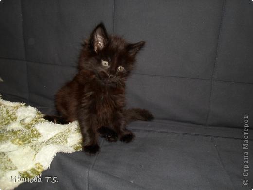 Обожаю черных кошек! Пожалуйста, знакомьтесь! Это размытое черное пятно с глазами - кошка Васса. фото 2