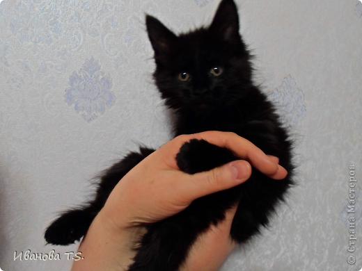 Обожаю черных кошек! Пожалуйста, знакомьтесь! Это размытое черное пятно с глазами - кошка Васса. фото 1
