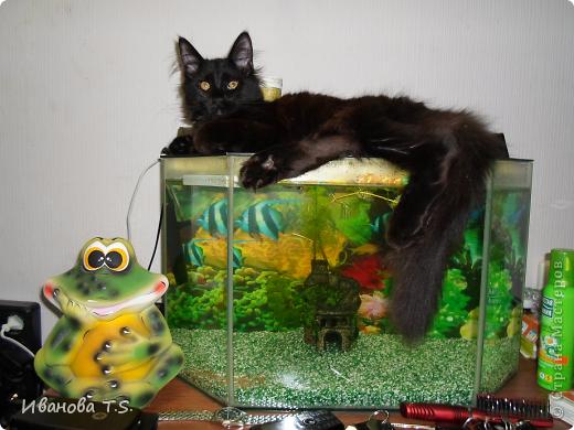 Обожаю черных кошек! Пожалуйста, знакомьтесь! Это размытое черное пятно с глазами - кошка Васса. фото 5