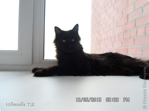 Обожаю черных кошек! Пожалуйста, знакомьтесь! Это размытое черное пятно с глазами - кошка Васса. фото 15