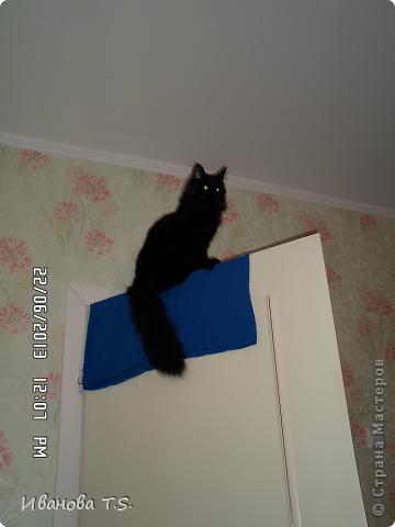 Обожаю черных кошек! Пожалуйста, знакомьтесь! Это размытое черное пятно с глазами - кошка Васса. фото 6