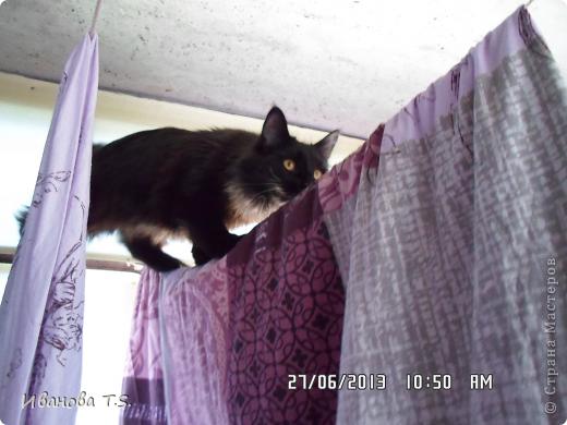 Обожаю черных кошек! Пожалуйста, знакомьтесь! Это размытое черное пятно с глазами - кошка Васса. фото 7