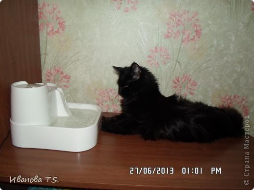 Обожаю черных кошек! Пожалуйста, знакомьтесь! Это размытое черное пятно с глазами - кошка Васса. фото 12