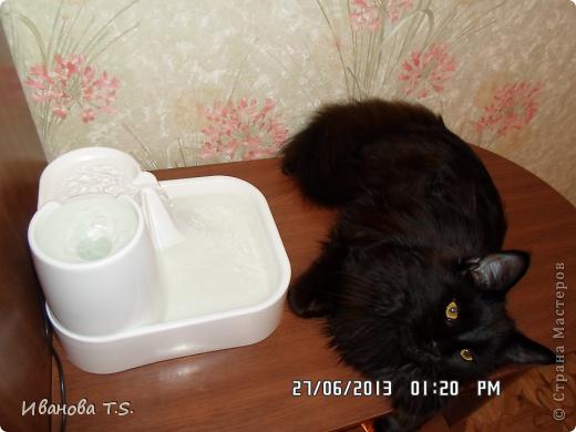 Обожаю черных кошек! Пожалуйста, знакомьтесь! Это размытое черное пятно с глазами - кошка Васса. фото 14