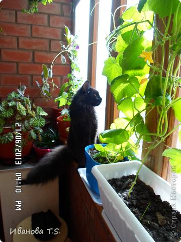Обожаю черных кошек! Пожалуйста, знакомьтесь! Это размытое черное пятно с глазами - кошка Васса. фото 8