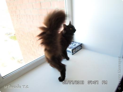 Обожаю черных кошек! Пожалуйста, знакомьтесь! Это размытое черное пятно с глазами - кошка Васса. фото 17