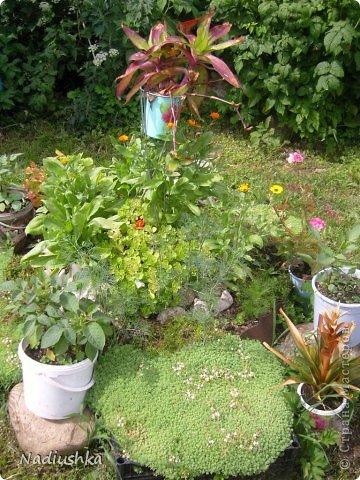 Милые мои мастерицы, я уже неоднократно показывала цветы, которые моя мама выращивает у себя в Тосненском районе Ленинградской области, обычно в качестве бонуса к моим работам. А вот сегодня хочу показать, во что выливаются творческие порывы моей мамочки. Ну и естественно, покажу еще цветы ) Но начну с клубнички (кстати, у нас её принято называть викторией, а клубникой зовут дикую ягоду, которая обычно растёт на лугах (не земляника!))  фото 16