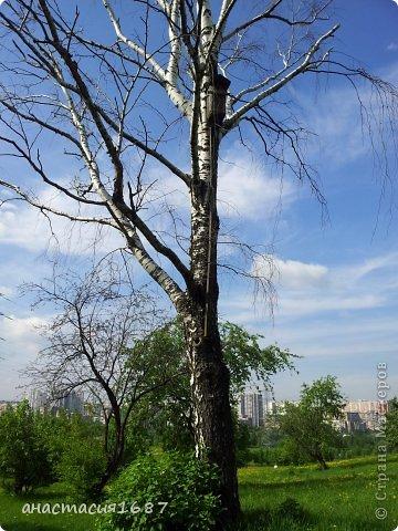 лето в митино))) фото 28