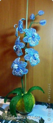 Это моя вторая орхидейка. На мой взгляд получилась получше первой. фото 1