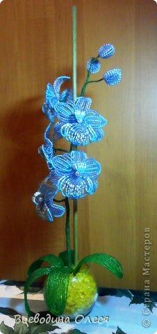 Это моя вторая орхидейка. На мой взгляд получилась получше первой. фото 3