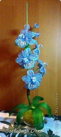 Это моя вторая орхидейка. На мой взгляд получилась получше первой. фото 2