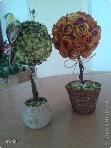 Вот создались такие эко топиарии! Из уже всем знакомым стружки древесной, а также из апельсиновых и мандариновых корок, ну и сухой спрей-розы. фото 2