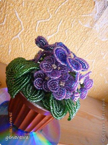 Моя первая орхидея фото 4