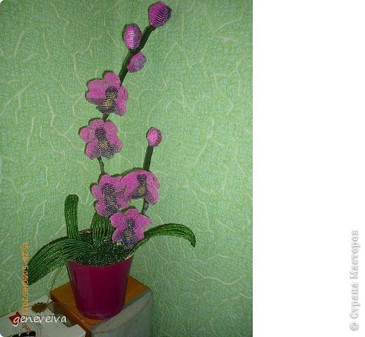 Моя первая орхидея фото 1
