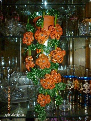 Моя первая орхидея фото 2