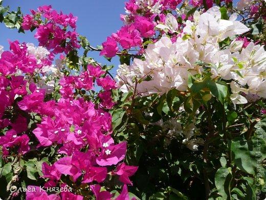 Отдыхали с детьми в июне в Египте. Можно слагать оды садовникам, которые в пустыне смогли создать такой рай.  фото 1