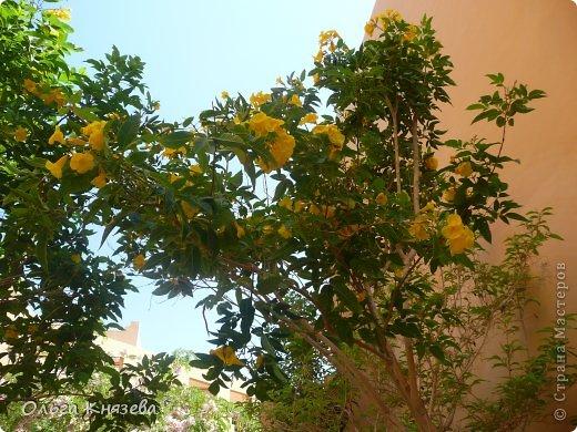 Отдыхали с детьми в июне в Египте. Можно слагать оды садовникам, которые в пустыне смогли создать такой рай.  фото 12