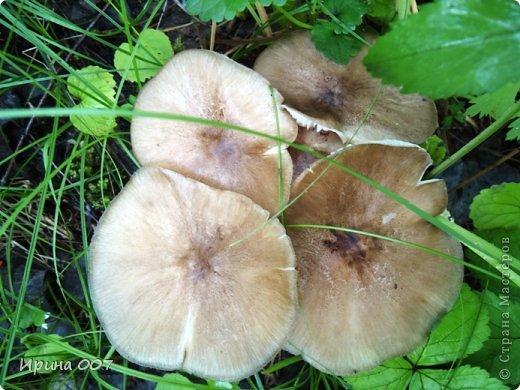 Какая красивая окраска гриба! фото 2