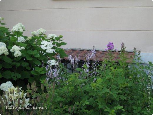 Это мой двор. Здесь есть 3 замечательные клумбы! Сейчас о них и пойдёт речь. Только немного общего вида. фото 10