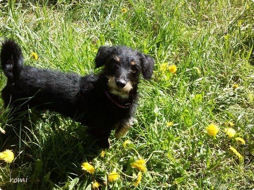 Меня зовут Рокки, я родился 13 июля 20111 года, это моя первая фотография (где-то две недели) фото 8