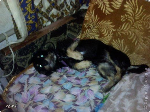 Меня зовут Рокки, я родился 13 июля 20111 года, это моя первая фотография (где-то две недели) фото 13