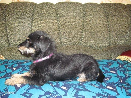 Меня зовут Рокки, я родился 13 июля 20111 года, это моя первая фотография (где-то две недели) фото 16