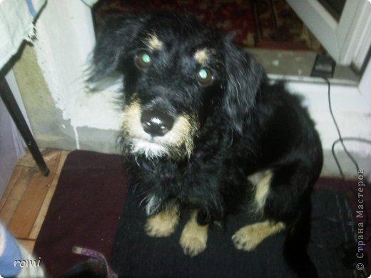 Меня зовут Рокки, я родился 13 июля 20111 года, это моя первая фотография (где-то две недели) фото 15