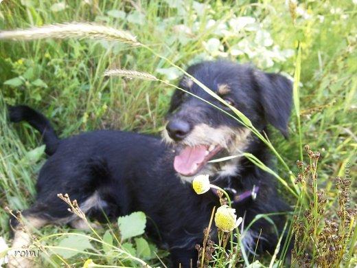 Меня зовут Рокки, я родился 13 июля 20111 года, это моя первая фотография (где-то две недели) фото 12