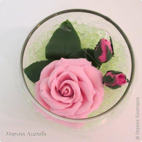 Роза сквозь стекло фото 3