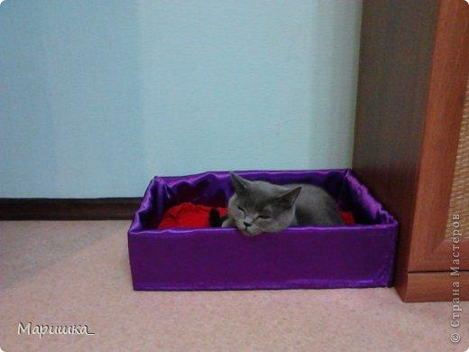 Спальное место для кота из коробки своими руками 86