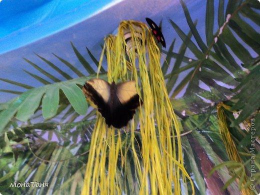 Сад тропических бабочек и орхидей фото 8