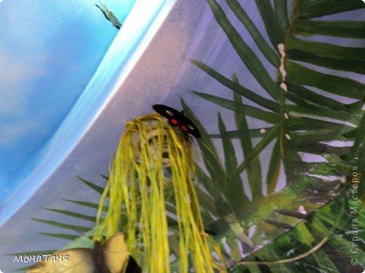 Сад тропических бабочек и орхидей фото 13